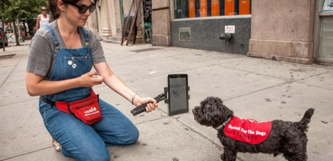 dog-learns-tablet